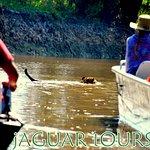 Pantanal Jaguar Tour by Gasparetour