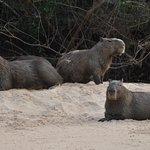 Capybara family by Gasparetour