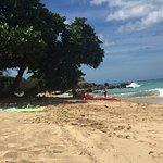 Shade Trees on Happy Bay Beach, St Martin