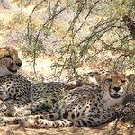Ulungele Tours & Safari's Photo