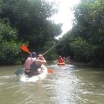 Kayak Aventure Mangrove Photo