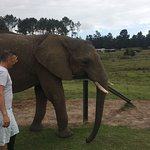 Knysna Elephant Park Photo