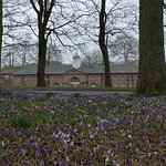 A sea of crocuses in front of the stable block