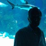 Photo of Fakieh Aquarium