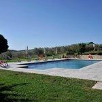 piscina immersa nell'oliveta