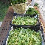 herbs crop