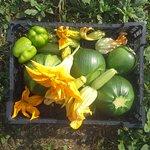 gardens crop