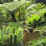 arid garden