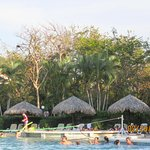 resort pool with monkey in trees