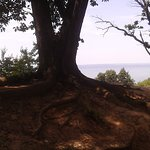 This view is at the beginning of the trail to the tip of Turkey Point Lighthouse!