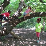 We welcome kids to climb our 100+ year old mulberry tree!