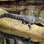 Highlands Hammock State Park صورة فوتوغرافية