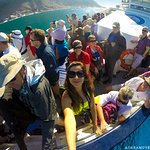 A boat ride on Hout Bay to the Seal Colony