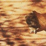 Riad les Inseparables Foto