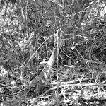 Foto de Varahicacos Ecological Reserve