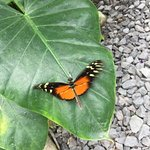 Photo of Butterfly Haven