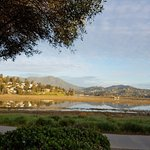 View of Coyote Creek and Mt Tam- from hotel. Bike paths alongside!
