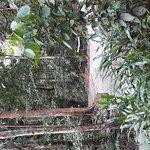Permai Rainforest Resort Foto