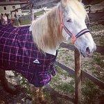 Cavalli dell'agriturismo!