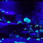 """coraux fluorecents, """"spécialité"""" de l'aquarium de Nouméa"""
