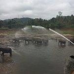 The Elephant Park