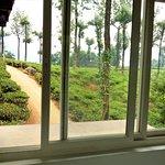 Photo of Gruenberg Tea Plantation Haus