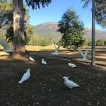 霍爾峽湖濱觀光園張圖片