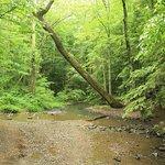 Dear little streams await your gaze!
