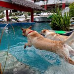 come and swim with your dog in Mirabel most pet friendly hotel in Asia