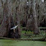 Photo of Cajun Country Swamp Tours