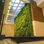 Huge green wall.
