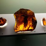 Photo of Amber Museum