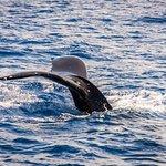 Foto de Ocean Sports Whale Watch Adventure
