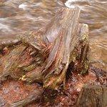Cool twisted stump!