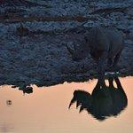 Rhino in the gloaming light.