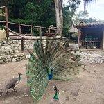 Photo of Los Aleros
