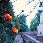 Kloster Santa Catalina (Monasterio de Santa Catalina) Foto