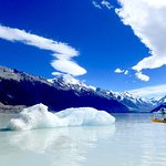 Ant kayaking by glacier