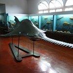 Foto de Natural History Museum
