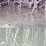 Huge male croc we came across about 1/2 hour into our cruise