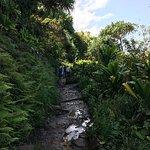 Muddy, rocky trail.