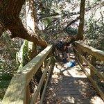 My son crawling under a tree limb fallen across a boardwalk on a trail.