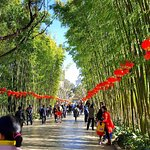 Green Lake_bamboo alley