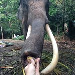 Photo of Funny Day Safari - Bophut Elephant Camp