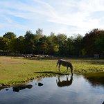 Photo of Olmense Zoo