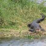 Gator Smile!