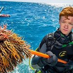 Removing Crown-of-thorns from the reef is technical too