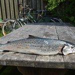 Prima fiskepladser og adgang til rengøringsplads og fryser