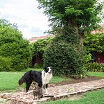 The dog and cat next to casa Rosada (where we stayed)