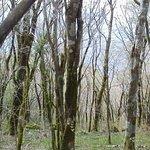 Photo of Shikoku Karst